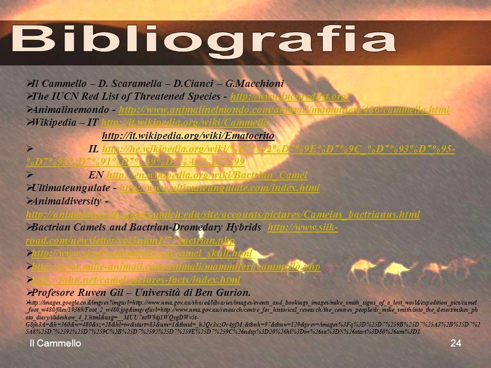 Il Cammello24  Il Cammello – D. Scaramella – D.Cianci – G.Macchioni  The IUCN Red List of Threatened Species - http://www.iucnredlist.org/http://www