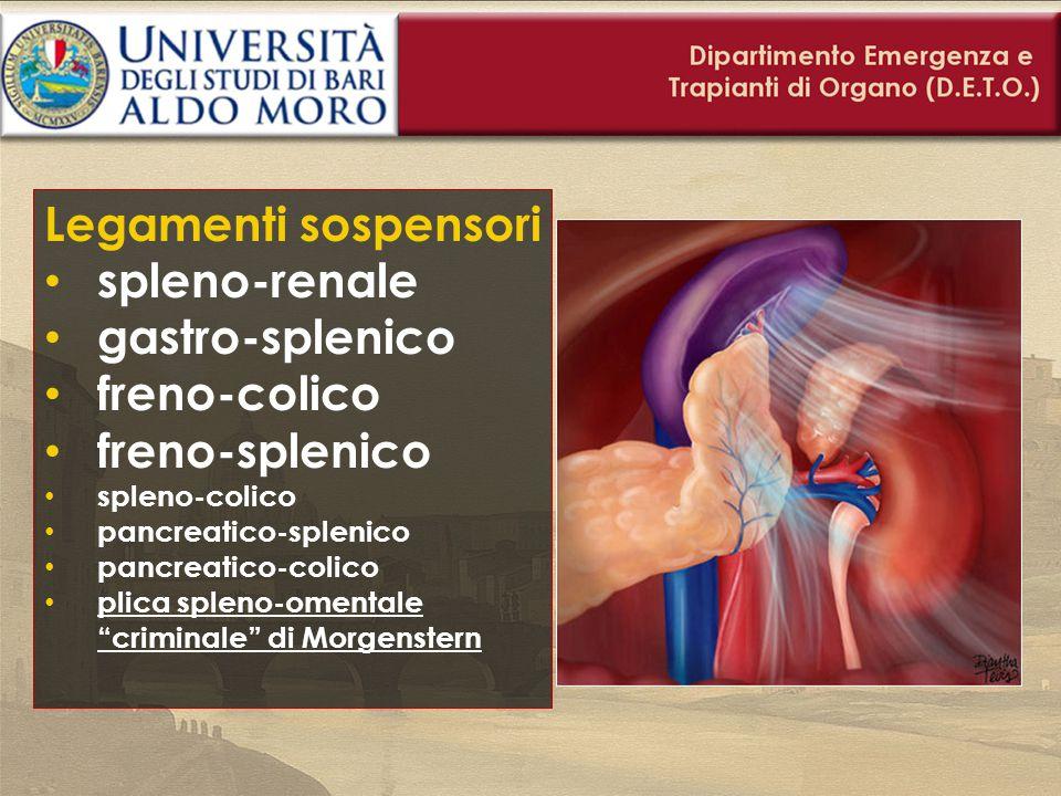 Legamenti sospensori spleno-renale gastro-splenico freno-colico freno-splenico spleno-colico pancreatico-splenico pancreatico-colico plica spleno-omen