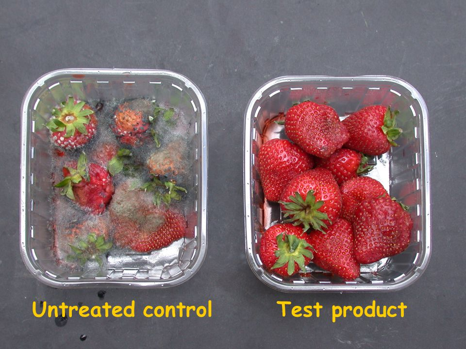Untreated controlTest product