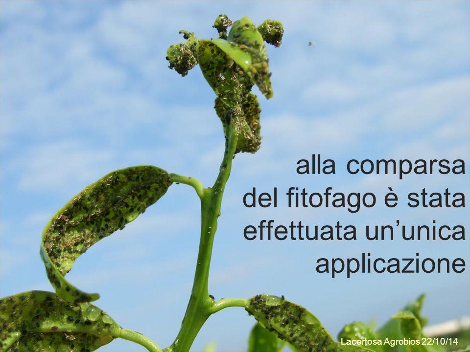 alla comparsa del fitofago è stata effettuata un'unica applicazione Lacertosa Agrobios 22/10/14