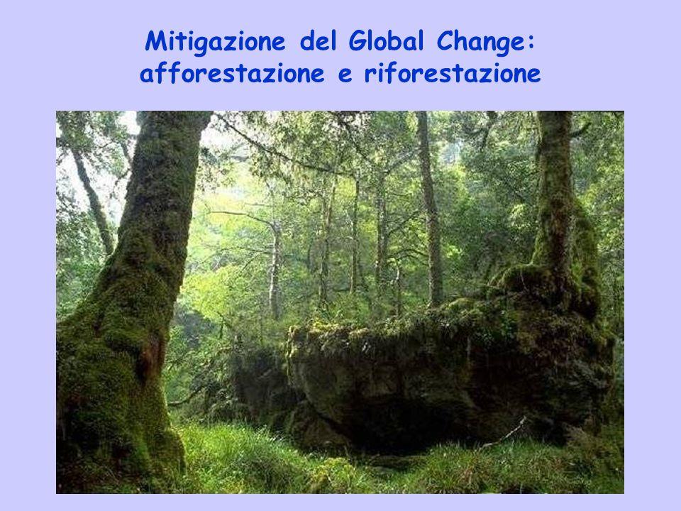 Mitigazione del Global Change: afforestazione e riforestazione