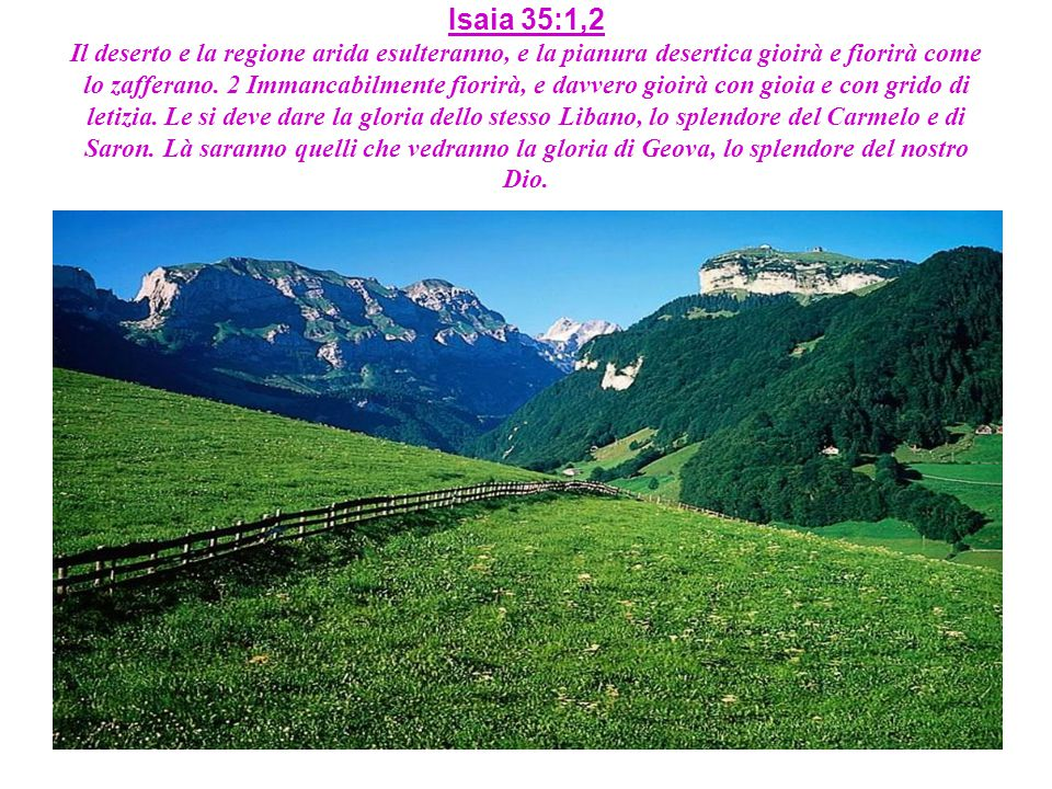 Isaia 35:1,2 Il deserto e la regione arida esulteranno, e la pianura desertica gioirà e fiorirà come lo zafferano. 2 Immancabilmente fiorirà, e davver