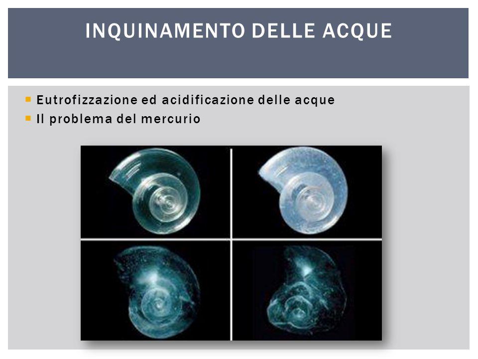  Eutrofizzazione ed acidificazione delle acque  Il problema del mercurio INQUINAMENTO DELLE ACQUE