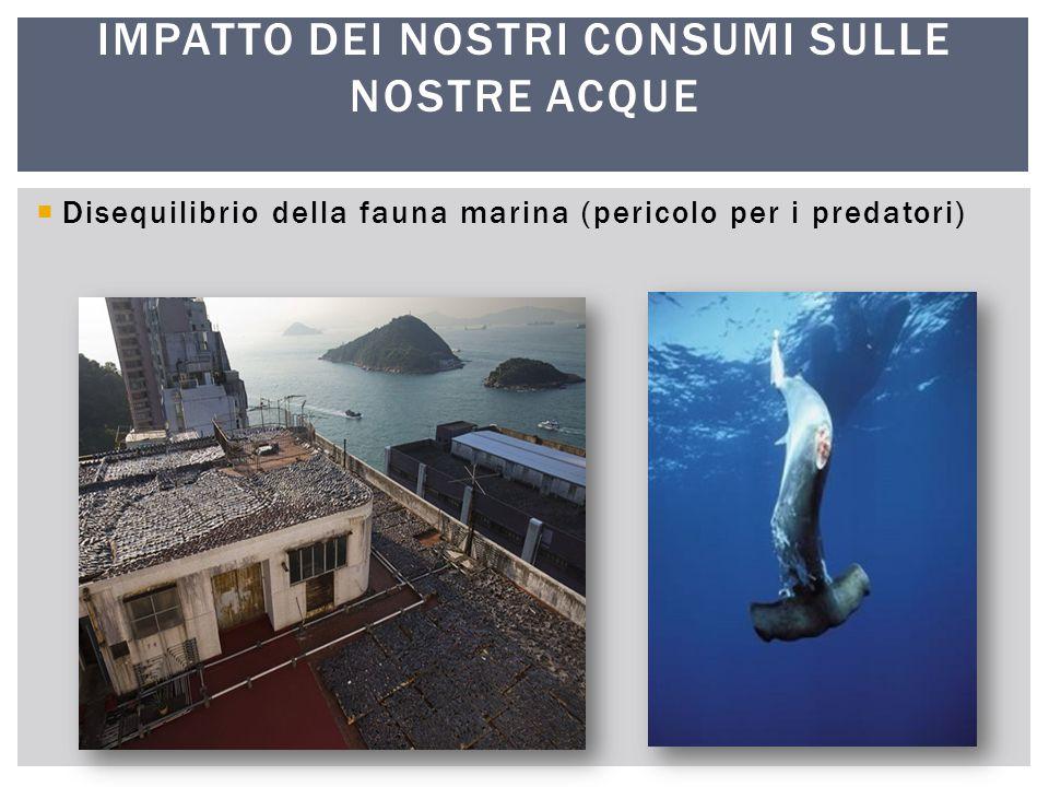  Disequilibrio della fauna marina (pericolo per le prede) IMPATTO DEI NOSTRI CONSUMI SULLE NOSTRE ACQUE