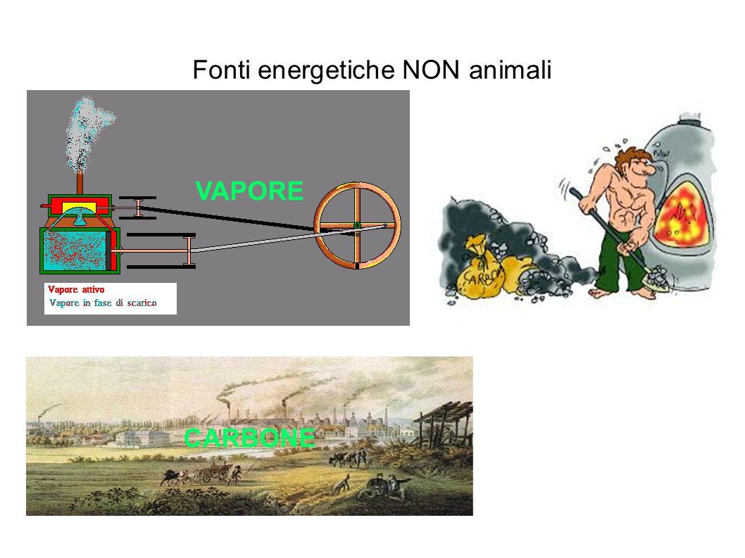 Fonti energetiche NON animali VAPORE CARBONE