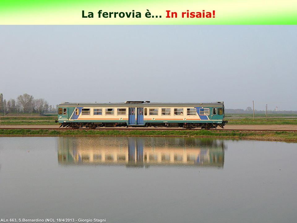 La ferrovia è... In risaia! 4