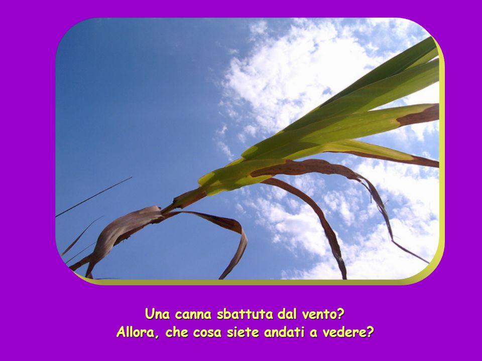 Mentre quelli se ne andavano, Gesù si mise a parlare di Giovanni alle folle: «Che cosa siete andati a vedere nel deserto?