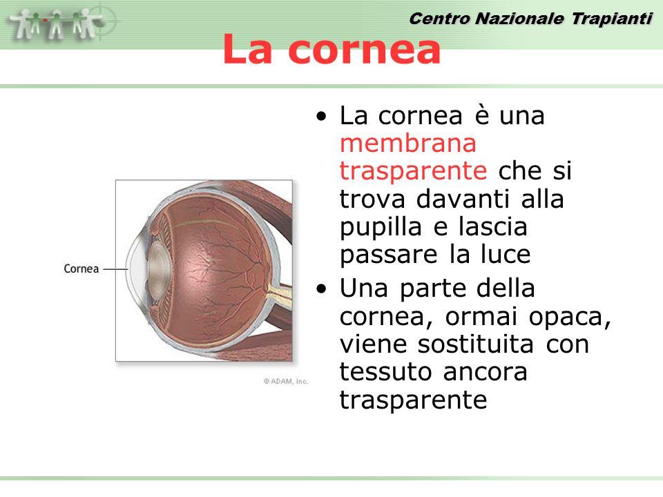 Centro Nazionale Trapianti La cornea La cornea è una membrana trasparente che si trova davanti alla pupilla e lascia passare la luce Una parte della cornea, ormai opaca, viene sostituita con tessuto ancora trasparente