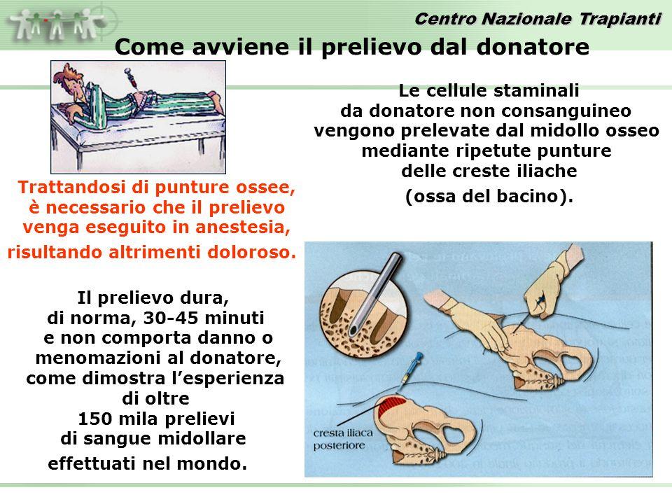 Le cellule staminali da donatore non consanguineo vengono prelevate dal midollo osseo mediante ripetute punture delle creste iliache (ossa del bacino)