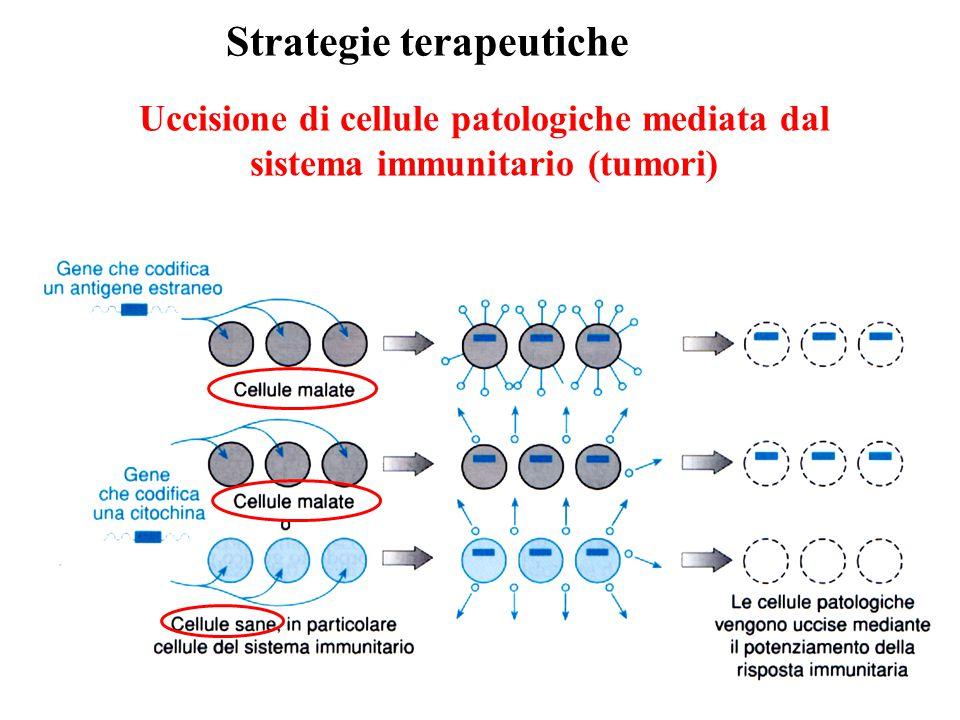 Uccisione di cellule patologiche mediata dal sistema immunitario (tumori) Strategie terapeutiche