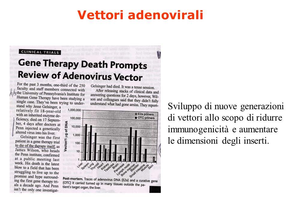 Vettori adenovirali Sviluppo di nuove generazioni di vettori allo scopo di ridurre immunogenicità e aumentare le dimensioni degli inserti.