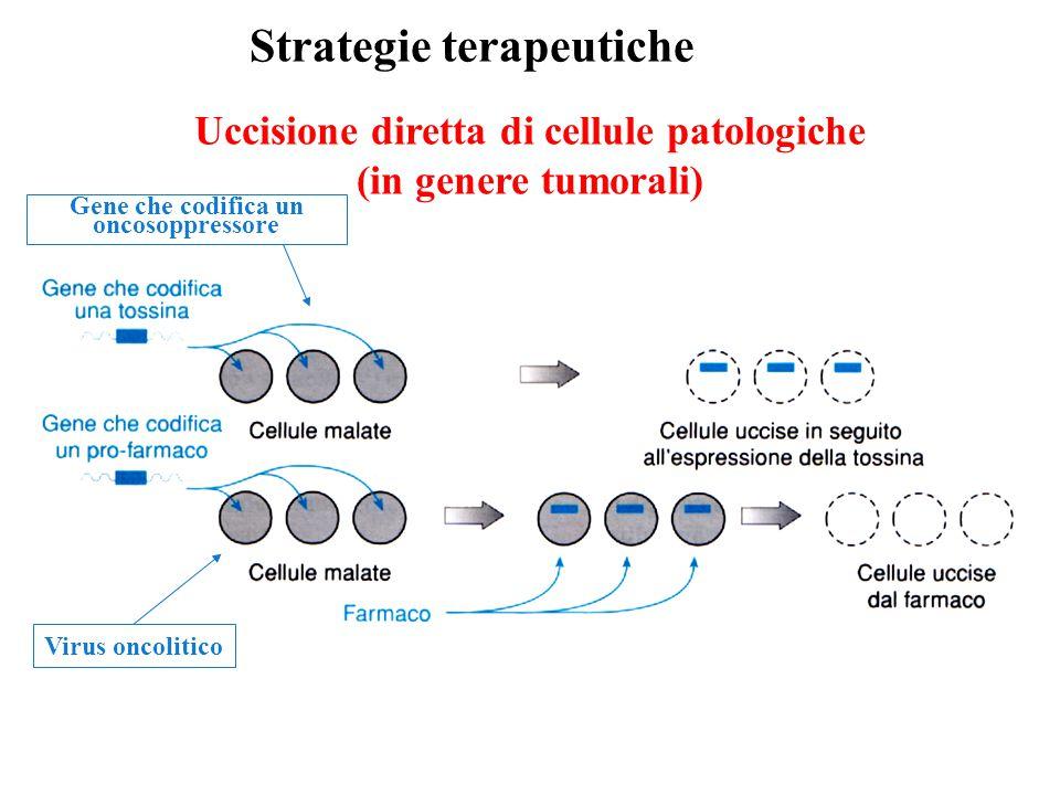Uccisione diretta di cellule patologiche (in genere tumorali) Strategie terapeutiche Virus oncolitico Gene che codifica un oncosoppressore