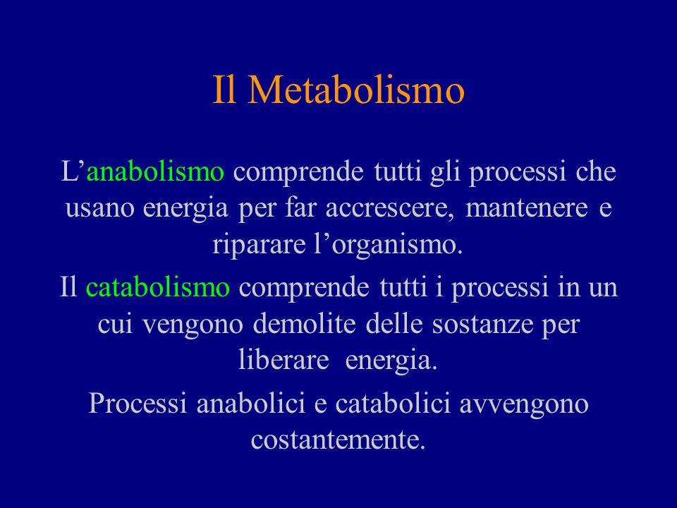 Il Metabolismo L'anabolismo comprende tutti gli processi che usano energia per far accrescere, mantenere e riparare l'organismo.