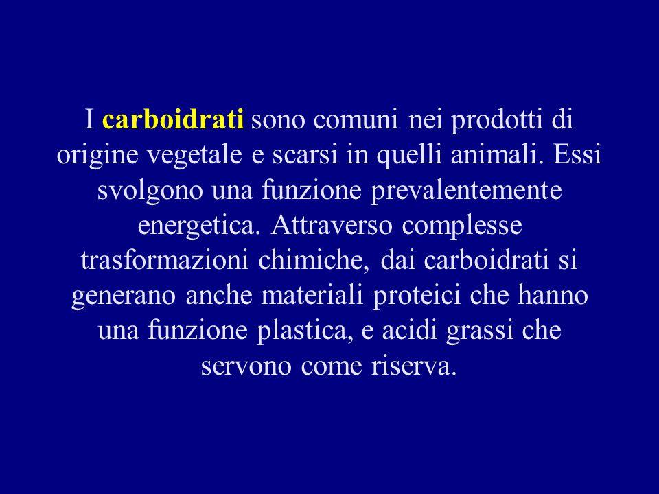 I carboidrati sono comuni nei prodotti di origine vegetale e scarsi in quelli animali.