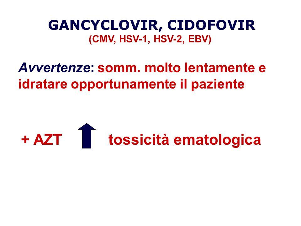 + AZTtossicità ematologica GANCYCLOVIR, CIDOFOVIR (CMV, HSV-1, HSV-2, EBV) Avvertenze: somm. molto lentamente e idratare opportunamente il paziente