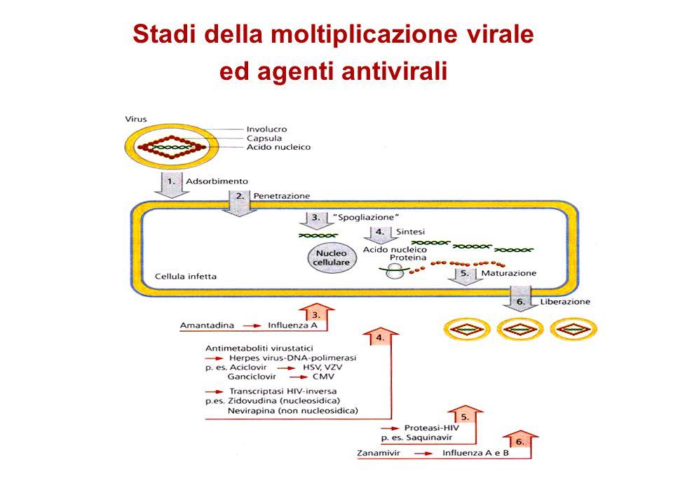 Stadi della moltiplicazione virale ed agenti antivirali
