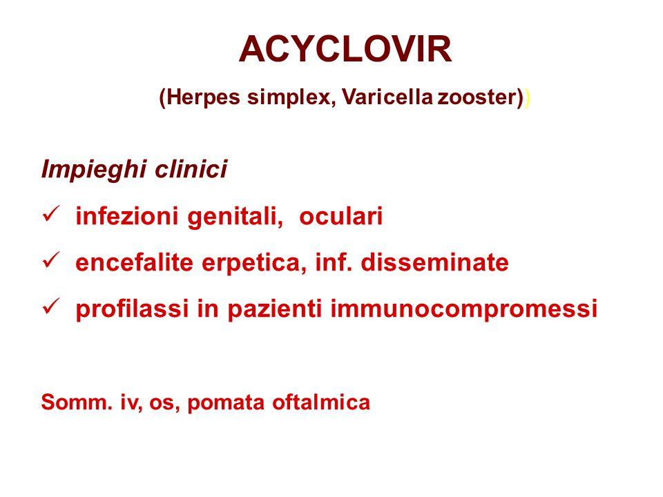farmacocinetica os: biodisponibilità limitata iv: buona diffusione tissutale (liquido c.s., umor acqueo, vitro, saliva, latte, fegato, rene, polmone, placenta) escrezione renale ACYCLOVIR