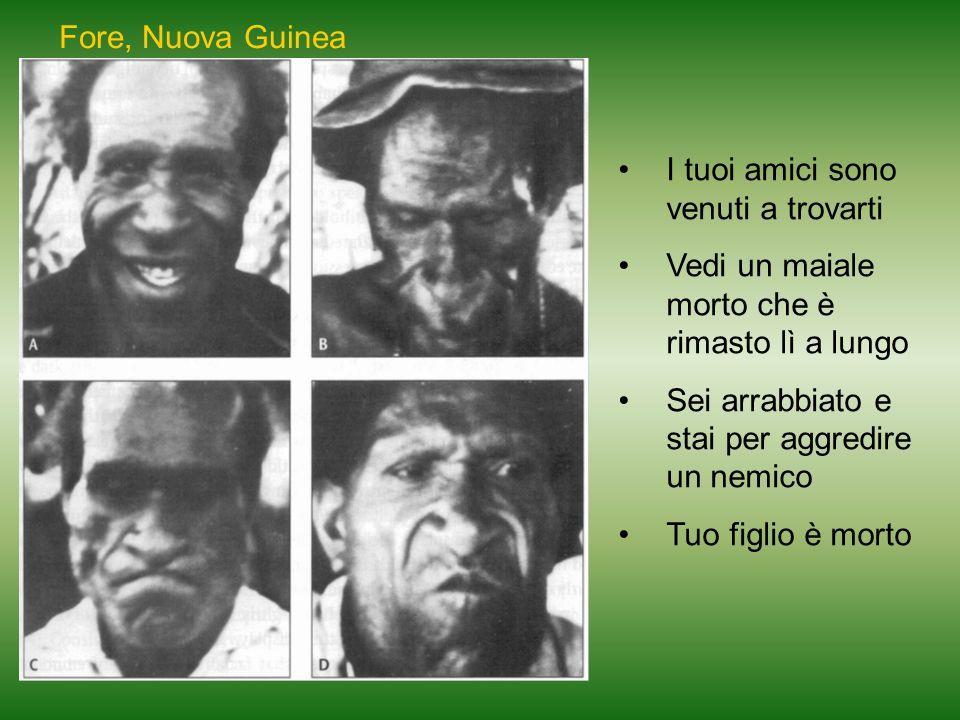 Fore, Nuova Guinea I tuoi amici sono venuti a trovarti Vedi un maiale morto che è rimasto lì a lungo Sei arrabbiato e stai per aggredire un nemico Tuo