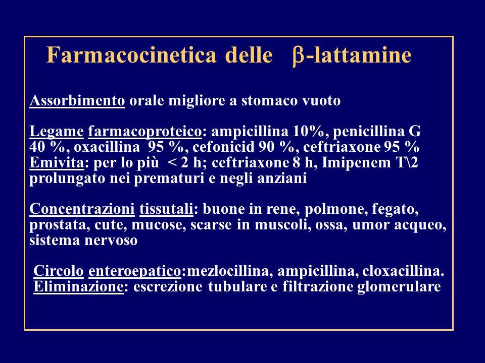 Farmacocinetica delle  -lattamine Assorbimento orale migliore a stomaco vuoto Legame farmacoproteico: ampicillina 10%, penicillina G 40 %, oxacillina 95 %, cefonicid 90 %, ceftriaxone 95 % Emivita: per lo più < 2 h; ceftriaxone 8 h, Imipenem T\2 prolungato nei prematuri e negli anziani Concentrazioni tissutali: buone in rene, polmone, fegato, prostata, cute, mucose, scarse in muscoli, ossa, umor acqueo, sistema nervoso Circolo enteroepatico:mezlocillina, ampicillina, cloxacillina.