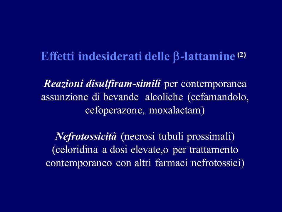 Effetti indesiderati delle  -lattamine (2) Reazioni disulfiram-simili per contemporanea assunzione di bevande alcoliche (cefamandolo, cefoperazone, moxalactam) Nefrotossicità (necrosi tubuli prossimali) (celoridina a dosi elevate,o per trattamento contemporaneo con altri farmaci nefrotossici)