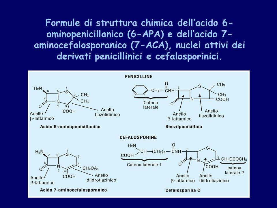 Formule di struttura chimica dell'acido 6- aminopenicillanico (6-APA) e dell'acido 7- aminocefalosporanico (7-ACA), nuclei attivi dei derivati penicillinici e cefalosporinici.