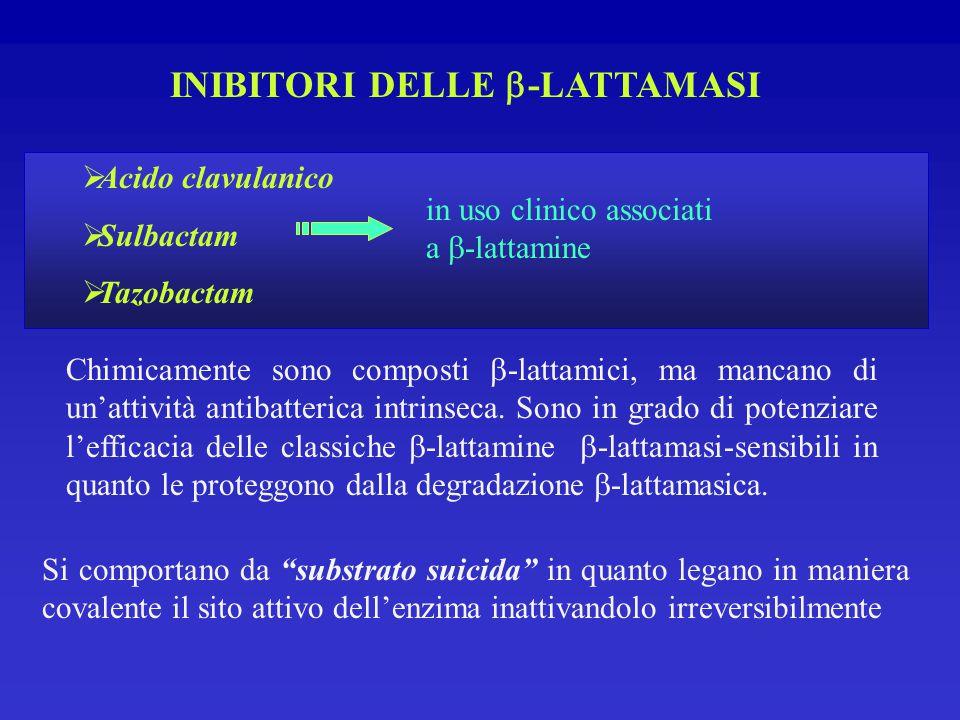 INIBITORI DELLE  -LATTAMASI Chimicamente sono composti  -lattamici, ma mancano di un'attività antibatterica intrinseca.