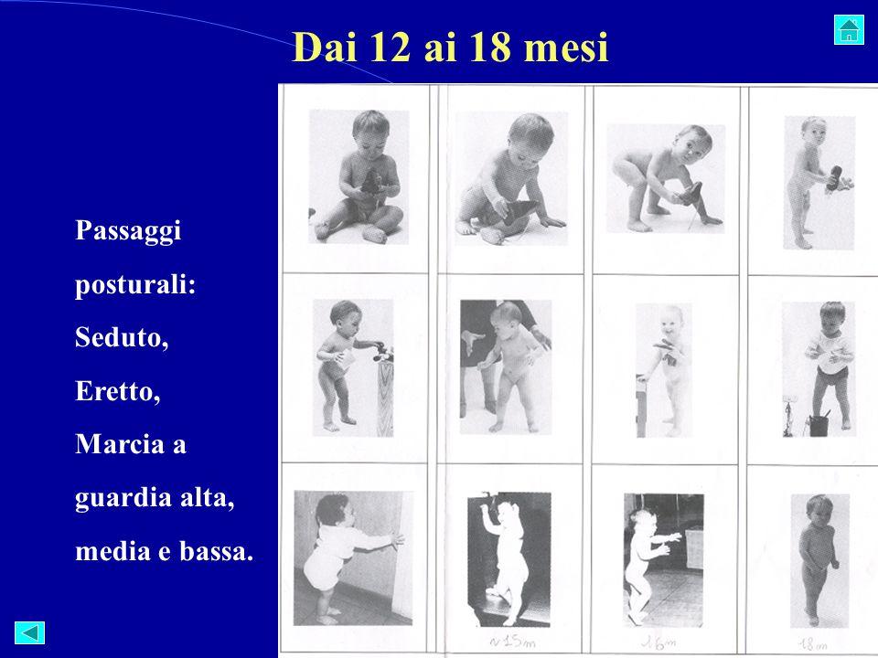 Dai 12 ai 18 mesi Passaggi posturali: Seduto, Eretto, Marcia a guardia alta, media e bassa.