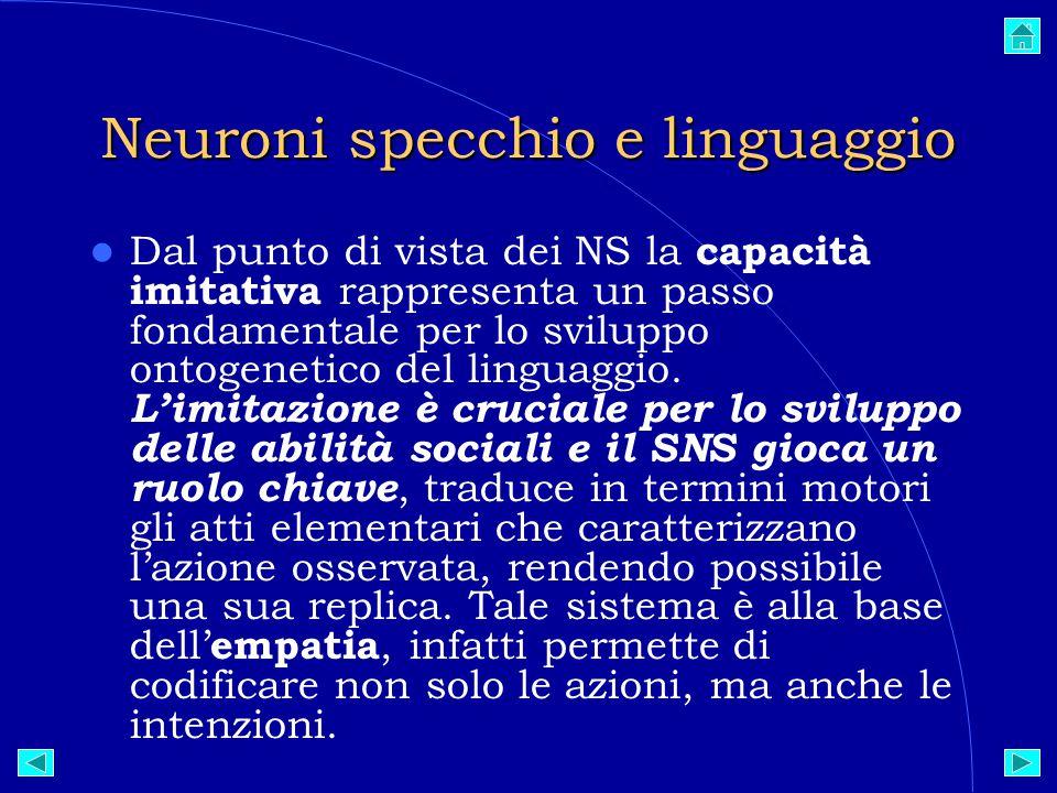 Neuroni specchio e linguaggio Dal punto di vista dei NS la capacità imitativa rappresenta un passo fondamentale per lo sviluppo ontogenetico del linguaggio.
