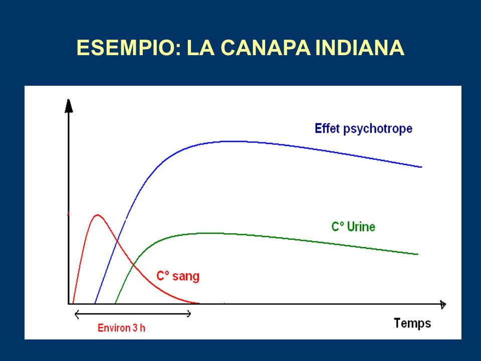 ESEMPIO: LA CANAPA INDIANA