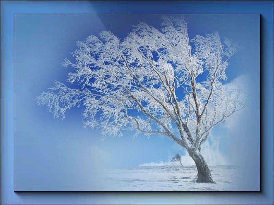 Desolazione invernale. Nel mondo di un solo colore sibila il vento. Bashò