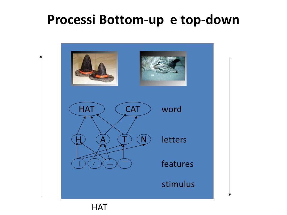Un modello ad elaborazione parallela Pianificazione struttura frasale Pianificazione struttura frasale Rievocazione lessico Rievocazione lessico Rievocazione forma fonologica della parole Rievocazione forma fonologica della parole