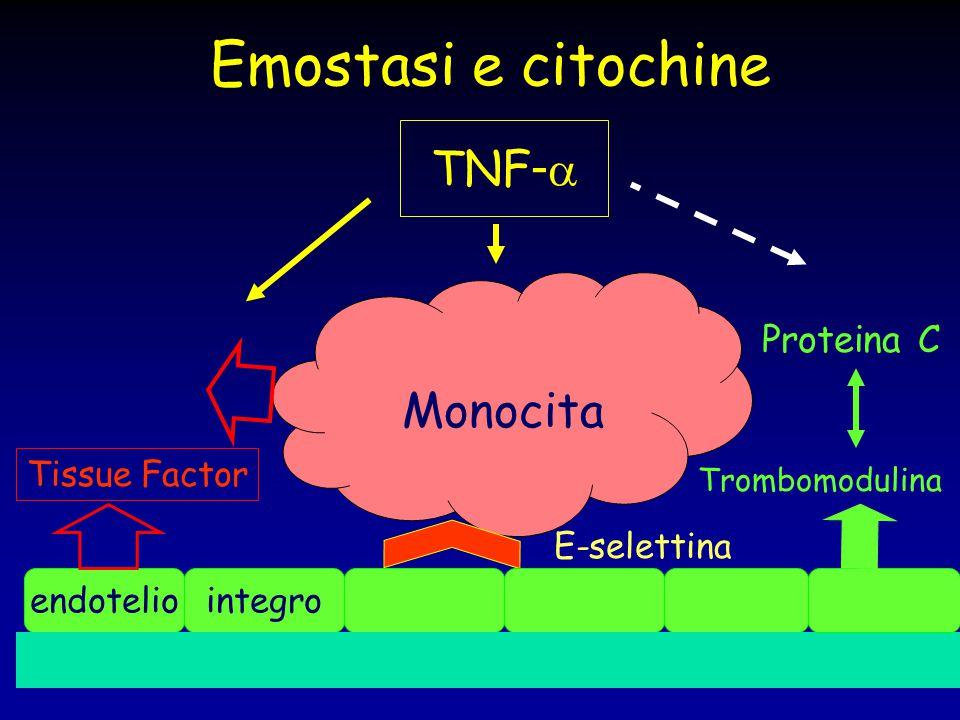 Emostasi e citochine subendotelio Monocita endoteliointegro Tissue Factor E-selettina TNF -  Trombomodulina Proteina C