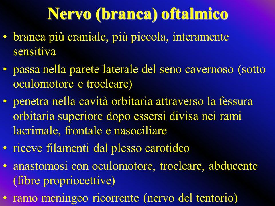 Nervo (branca) oftalmico branca più craniale, più piccola, interamente sensitiva passa nella parete laterale del seno cavernoso (sotto oculomotore e t