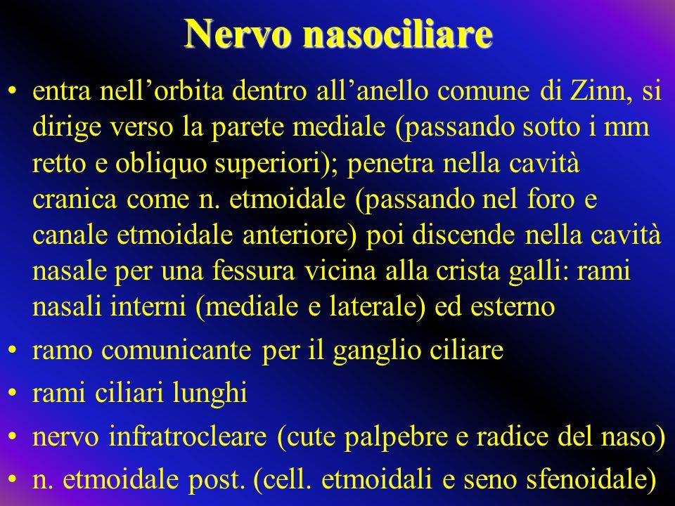 Nervo nasociliare entra nell'orbita dentro all'anello comune di Zinn, si dirige verso la parete mediale (passando sotto i mm retto e obliquo superiori