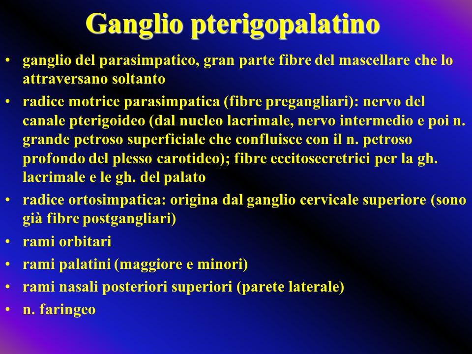 Ganglio pterigopalatino ganglio del parasimpatico, gran parte fibre del mascellare che lo attraversano soltanto radice motrice parasimpatica (fibre pr