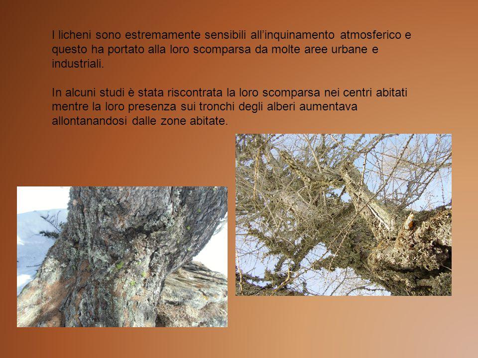 I licheni sono estremamente sensibili all'inquinamento atmosferico e questo ha portato alla loro scomparsa da molte aree urbane e industriali. In alcu