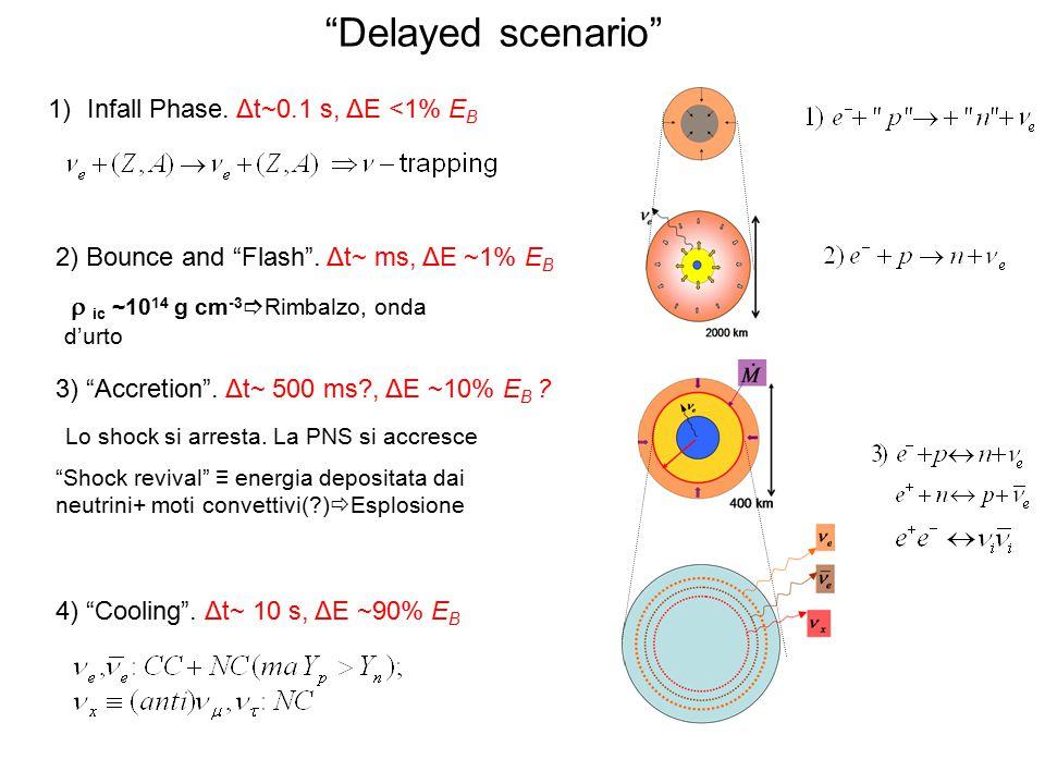 """""""Delayed scenario"""" 1)Infall Phase. Δt~0.1 s, ΔE <1% E B 2) Bounce and """"Flash"""". Δt~ ms, ΔE ~1% E B  ic ~10 14 g cm -3  Rimbalzo, onda d'urto 3) """"Accr"""
