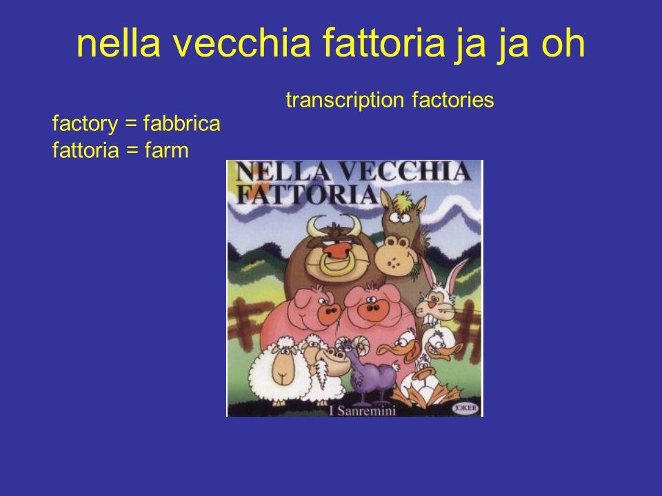 nella vecchia fattoria ja ja oh factory = fabbrica fattoria = farm transcription factories