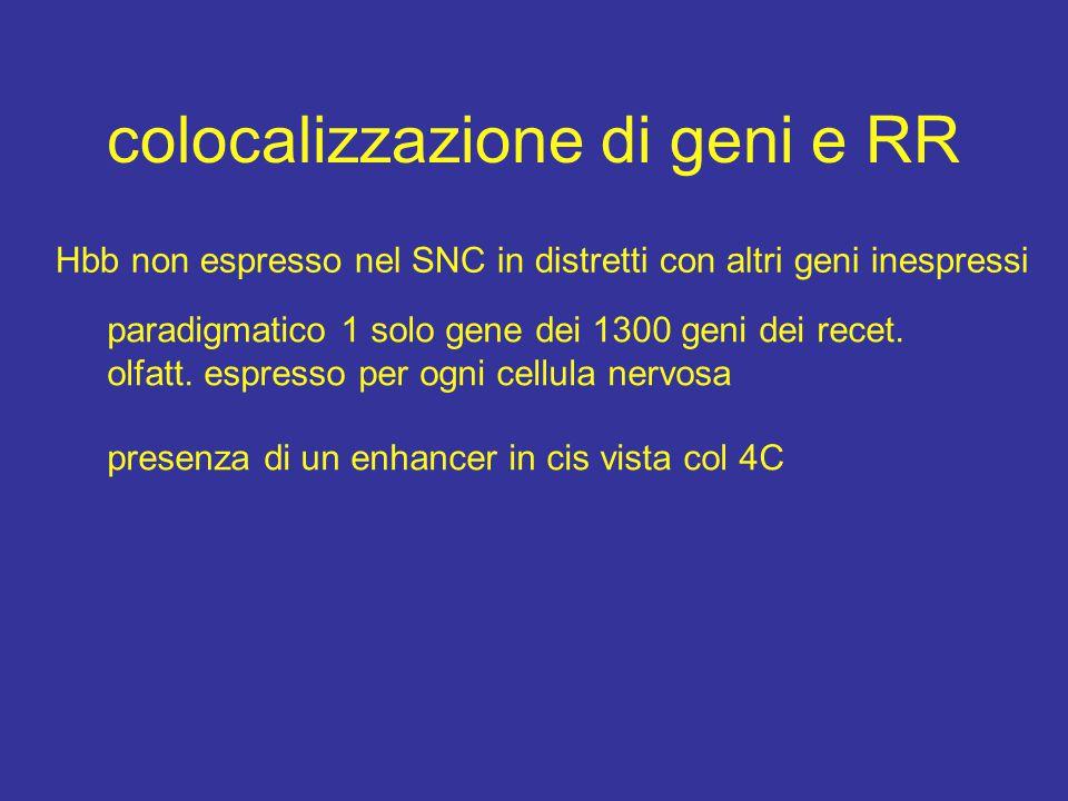 colocalizzazione di geni e RR Hbb non espresso nel SNC in distretti con altri geni inespressi paradigmatico 1 solo gene dei 1300 geni dei recet.