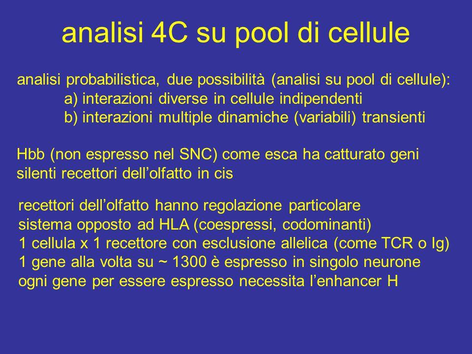 analisi 4C su pool di cellule analisi probabilistica, due possibilità (analisi su pool di cellule): a) interazioni diverse in cellule indipendenti b) interazioni multiple dinamiche (variabili) transienti Hbb (non espresso nel SNC) come esca ha catturato geni silenti recettori dell'olfatto in cis recettori dell'olfatto hanno regolazione particolare sistema opposto ad HLA (coespressi, codominanti) 1 cellula x 1 recettore con esclusione allelica (come TCR o Ig) 1 gene alla volta su ~ 1300 è espresso in singolo neurone ogni gene per essere espresso necessita l'enhancer H