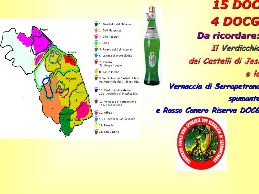 15 DOC 4 DOCG Da ricordare: Il Verdicchio dei Castelli di Jesi e la Vernaccia di Serrapetrona spumante e Rosso Conero Riserva DOCG