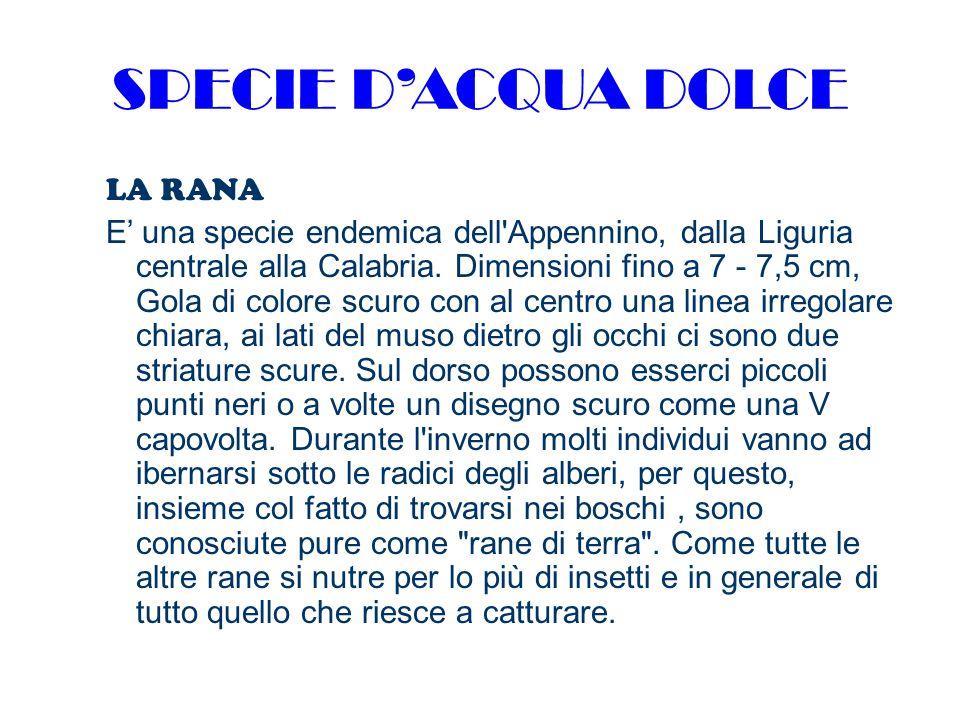SPECIE D'ACQUA DOLCE LA RANA E' una specie endemica dell Appennino, dalla Liguria centrale alla Calabria.
