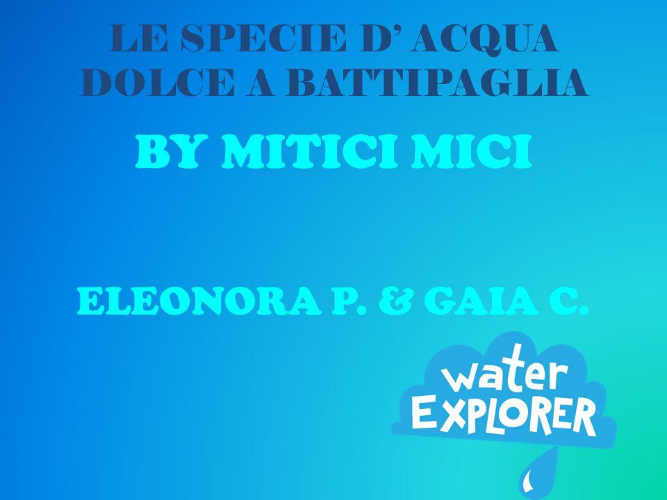 LE SPECIE D' ACQUA DOLCE A BATTIPAGLIA BY MITICI MICI ELEONORA P. & GAIA C.