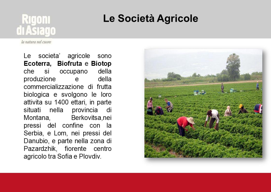 Le societa' agricole sono Ecoterra, Biofruta e Biotop che si occupano della produzione e della commercializzazione di frutta biologica e svolgono le l