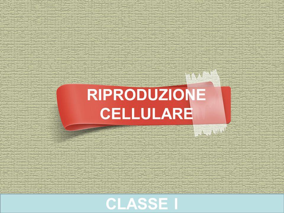 RIPRODUZIONE CELLULARE CLASSE I