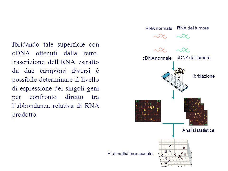 Ibridando tale superficie con cDNA ottenuti dalla retro- trascrizione dell'RNA estratto da due campioni diversi è possibile determinare il livello di