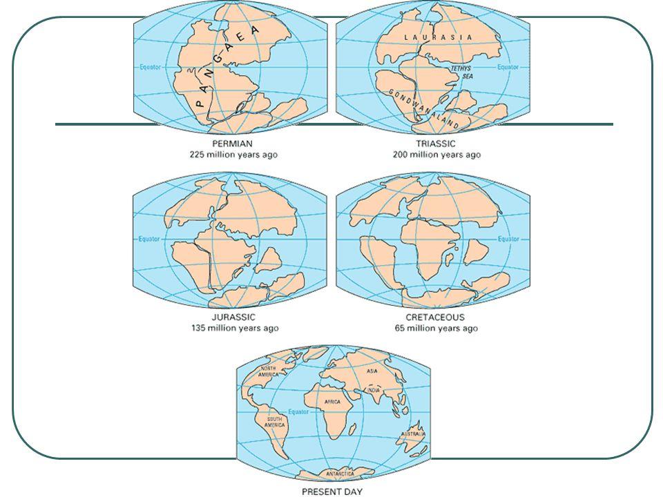 La crosta terrestre È costituita da zolle o placche Queste galleggiano sulla massa fluida del magma Entrano in contatto tra loro e si deformano