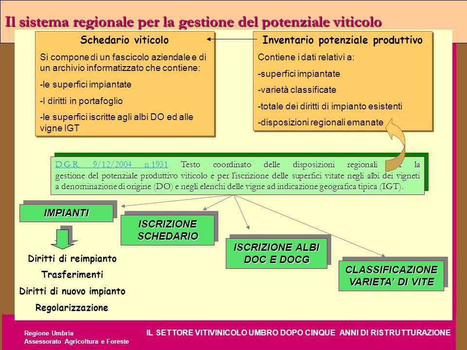 Regione Umbria IL SETTORE VITIVINICOLO UMBRO DOPO CINQUE ANNI DI RISTRUTTURAZIONE Assessorato Agricoltura e Foreste Il sistema regionale per la gestio