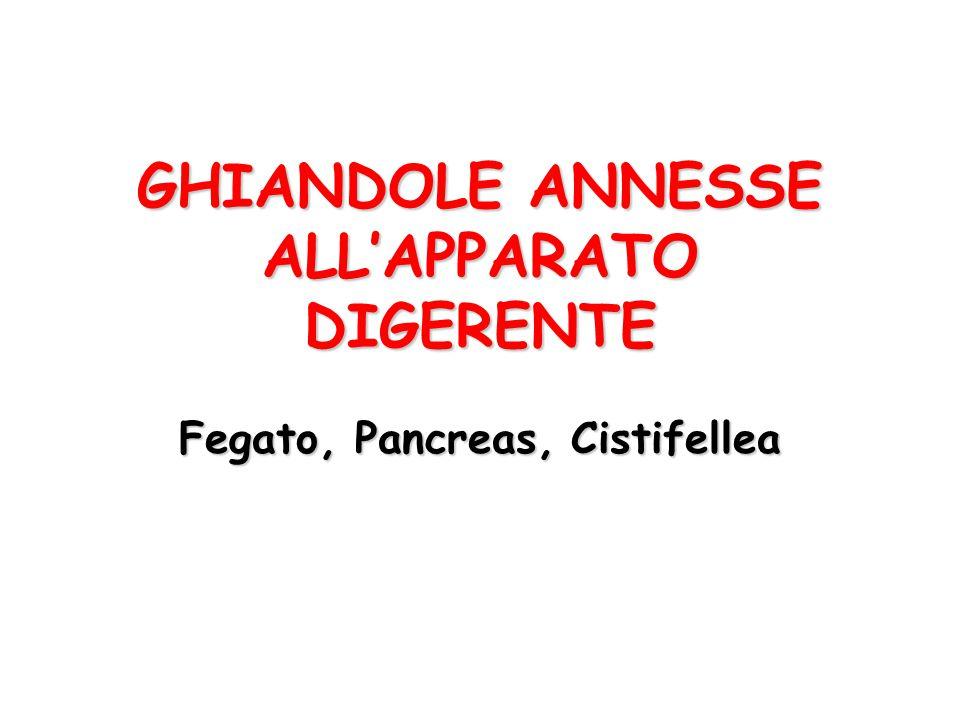 GHIANDOLE ANNESSE ALL'APPARATO DIGERENTE Fegato, Pancreas, Cistifellea