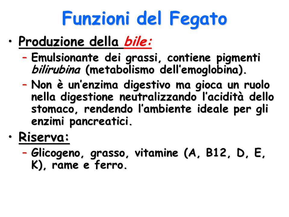 Funzioni del Fegato Produzione della bile:Produzione della bile: –Emulsionante dei grassi, contiene pigmenti bilirubina (metabolismo dell'emoglobina).